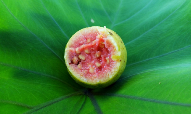 Can Drinking Guava Juice Help Treat Diabetes Mellitus?