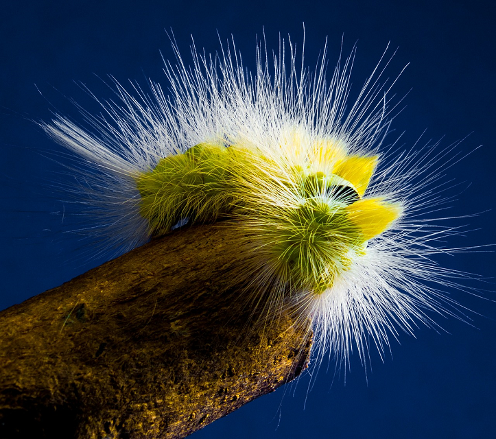 Can a Caterpillar Help Solve Environmental Recycling Problems?